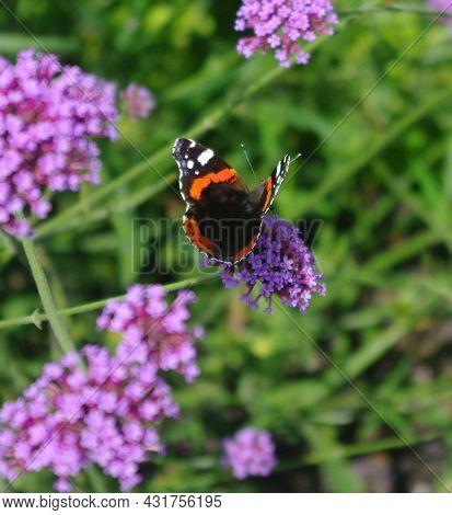 Macro Photo- Butterfly On Flower, In The Garten