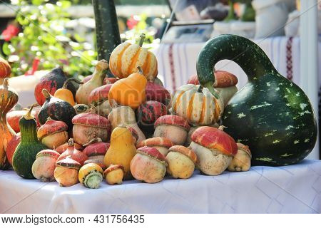 Autumn Color Pumpkins Im Whole Foods Market. Fall Inspired Color Palettes. Autumn Vegetable Market: