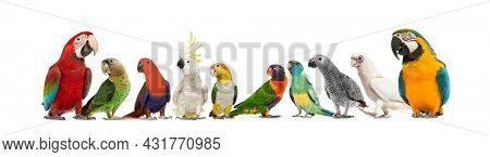 Large group of many different exotic pet birds, Parrots, parakeets, macaws, love birds in a row, isolated on white