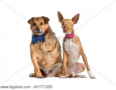 One-eyed blind and an amputee crossbreed dog sitting together, isolated on white