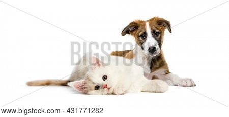 Lying down cat and dog together in front of white background