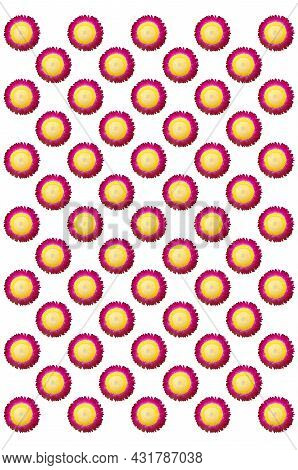 Repeated Pattern Design Of Pink Petals And Yellow Pistils Of Everlasting Flowers Isolated On White B