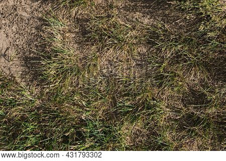 Withered Grass, Summer Drought, No Water, Dryness