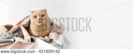 Cute Cat Lying On Soft Plaid Banner. Home Textile, Cozy Autumn, Winter Web Line. Sale Concept, Hygge
