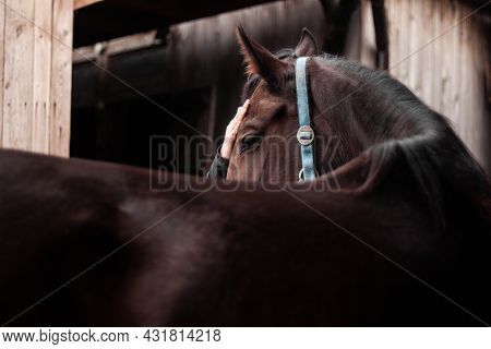 Portrait of a person stroking horse head close up | Close up on person\'s hand stroking horse. Beautiful bay horse enjoy stroking its head. Bond between human and horse.