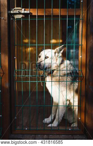 dog sitting in kennel outdoor kennel enclosure, close-up view