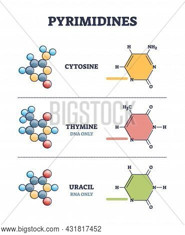 Pyrimidines As Cytosine, Thymine And Uracil Organic Compound Examples In Outline Diagram. Collection