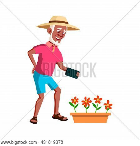 Old Man Photographing Flowers In Garden Vector. Happy Aged Pensioner Guy Making Photo Growing Flower