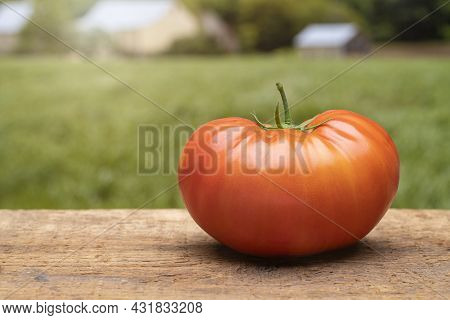 Freshly Picked Heirloom Tomato On A Wood Table At The Farm.