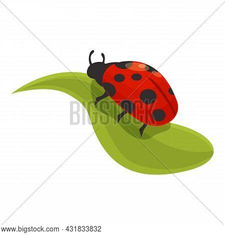 Plant Ladybird Icon Cartoon Vector. Garden Ladybug. Bug Summer