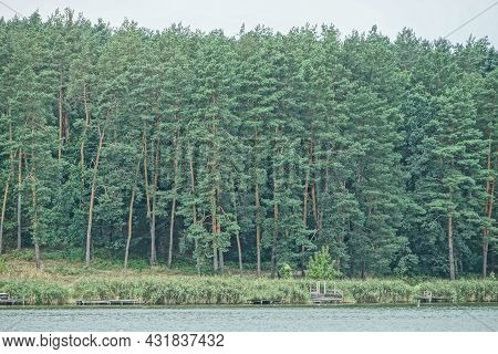 A Row Of Green Coniferous Pine Trees On The Shore Of The Lake Water
