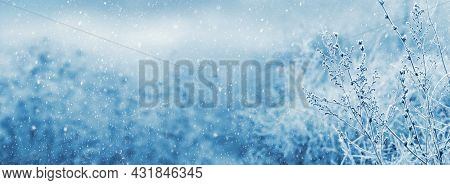 Frost-covered Stems Of Dry Plants On A Blurred Background During A Snowfall. Christmas And New Year
