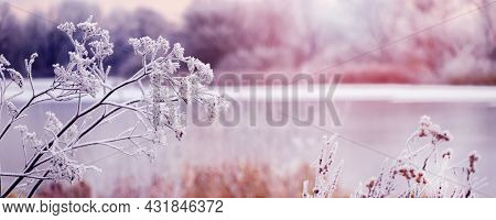 Frost-covered Plants On The Shore River In The Morning During Sunrise