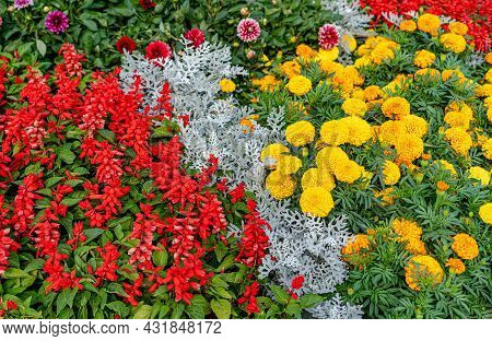 Flower Bed With Blooming Flowers.flower Bed With Blooming Flowers