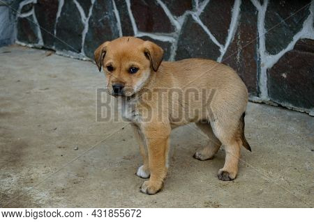 Lonely Little Puppy With Sad Eyes Close-up Outside Near A Wall Of A House On A Concrete. Hungry Pupp