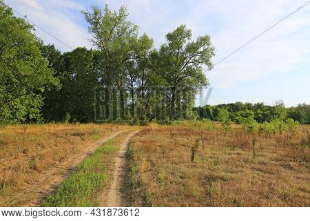 sunny landscape with rut road on dry meadow border in forest