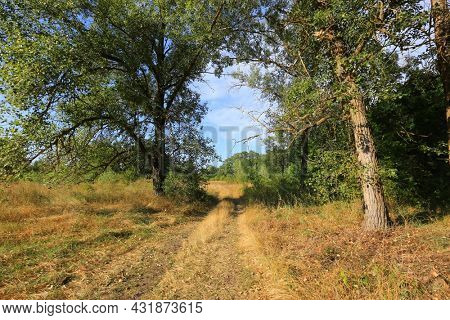 road on dry meadow among trees in steppe. Take it in Ukraine