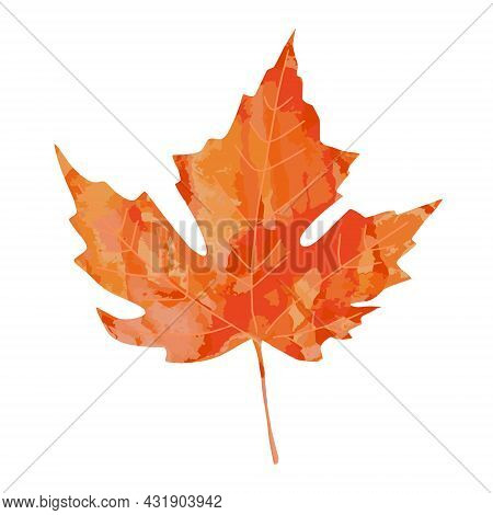 Bright Watercolor Painted Artistic Orange Red Watercolor Maple Leaf Vector Illustration Isolated On