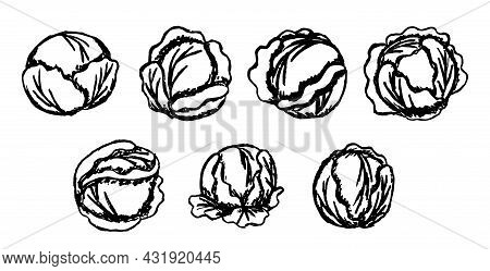 Black And White Vector Cartoon Sketches Of Cabbage Heads. Set Of Simple Line Drawings Of Cabbage Har