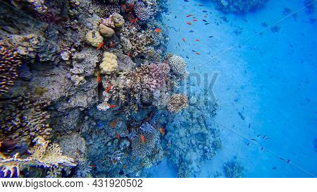 The Underwater Water Area Of The Red Sea Where Tropical Red Fish Swim Shoals Of Fish