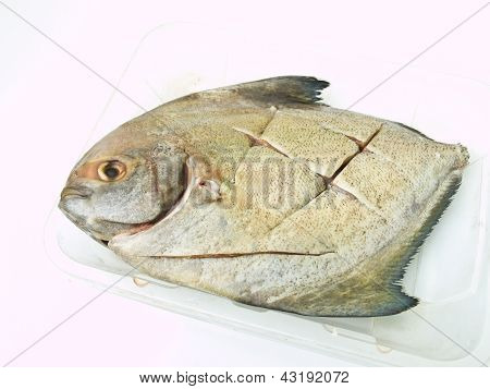 A Fresh Butterfish On A Cleared Plastic Tray Isolated On White Background