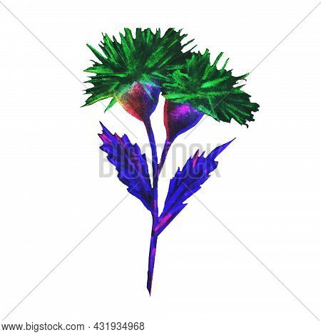 The Flower Blooms In Spring And Summer In Hot Countries It Grows In The Valley Expensive Varieties O