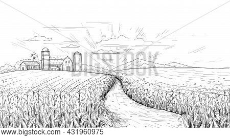 Corn Field. Hand Drawn Agricultural Engraving With Summer And Autumn Maize Cobs. Farm House And Silo