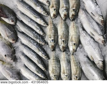 Fresh Fish On Ice On The Indonesian Market