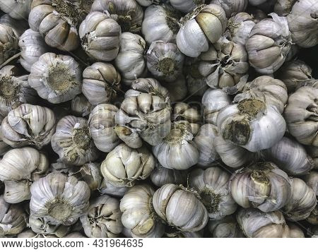 White Garlic Pile Texture. Fresh Garlic On Market Table Closeup Photo.