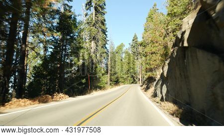 Driving Auto In Sequoia Forest, Perspective View From Car. Large Redwood Coniferous Trees And Roadwa
