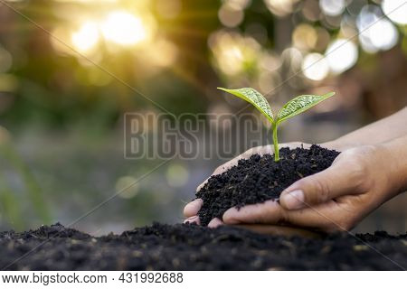 Human Hands Planting Saplings Or Trees In The Soil, Earth Day Concept And Global Warming Campaign