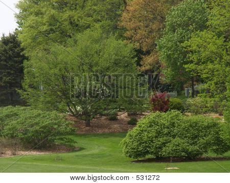 Arboretum In Spring