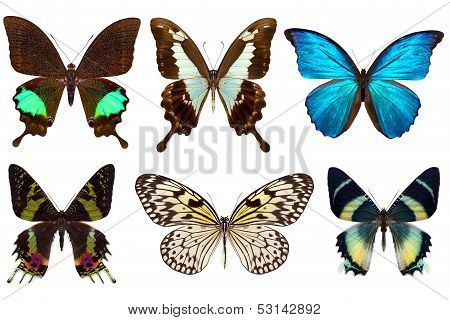 Many different beautiful butterflies on white background poster