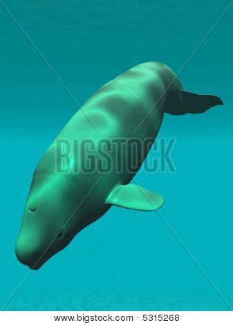 3 D Render of an Beluga - White Whale poster