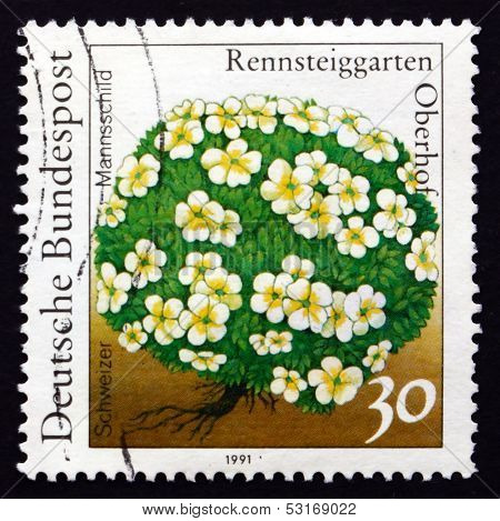 Postage Stamp Germany 1991 Androsace Helvetica, Flowering Plant