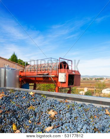 cabernet sauvignon wine grapes and round press in outdoor after harvest