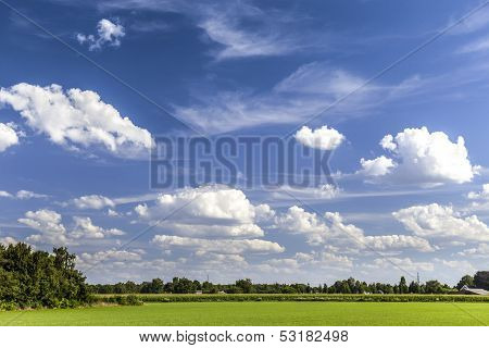 Green landscape in summer