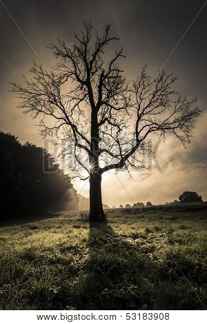 Sunrise behind dead leafless tree