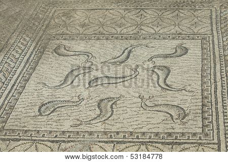 Ancient Roman Dolphin Mosaic At Volubilis