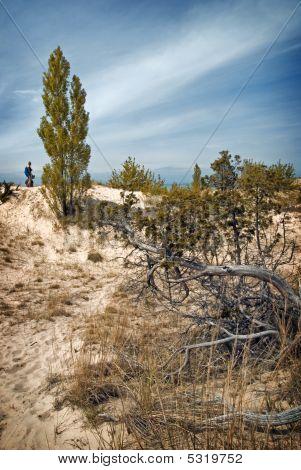 Pinery Dunes 3