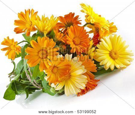 orange flower bouquet heap of calendula close up macro Isolated on white background