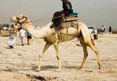 police ridding camel in egypt poster