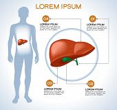 Liver. Modern medical infographics. Internal organs in a human body. Anatomy of people poster