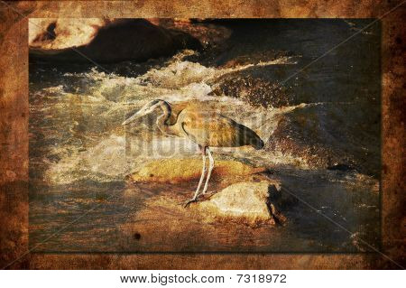 Heron hunting along the river in Zion National Park poster