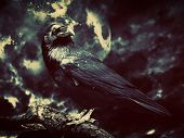 Black raven in moonlight perched on tree. Scary, creepy, gothic setting. Cloudy night with full moon. Halloween poster