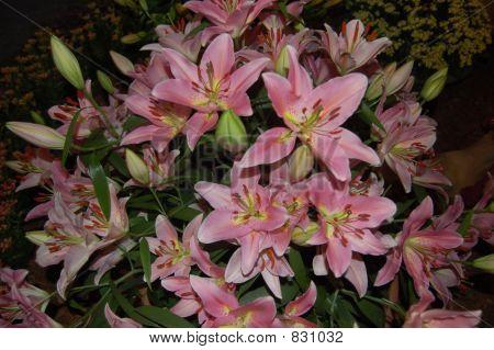 Arrangement of lilies