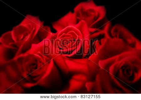 Center of roses. Deep red roses on black background. Focus is on center red rose. Surrounding roses are Intentionally soft focused.