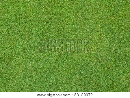 Beautiful Green Grass Pattern