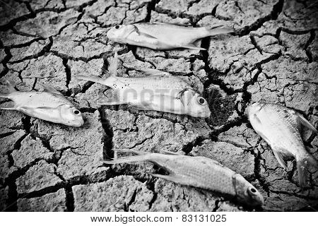 fish died on cracked earth / drought / river dried up /famine / scarcity / global warming / natural destruction / extinction