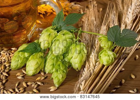 hop cones and raw material for beer production poster